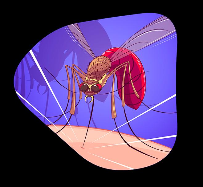 moustique home