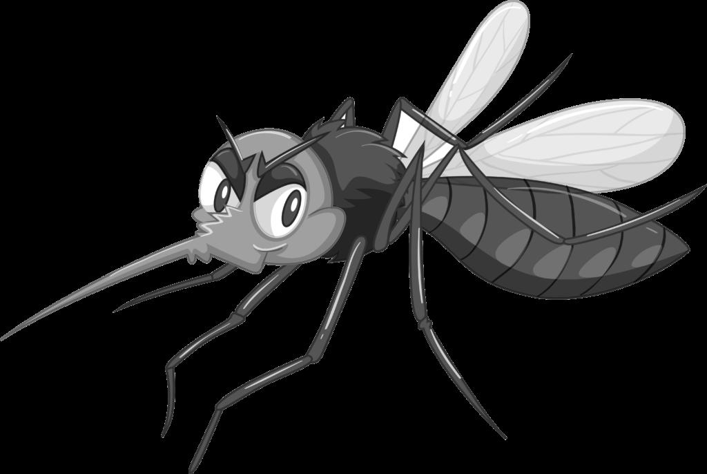 moustique noir