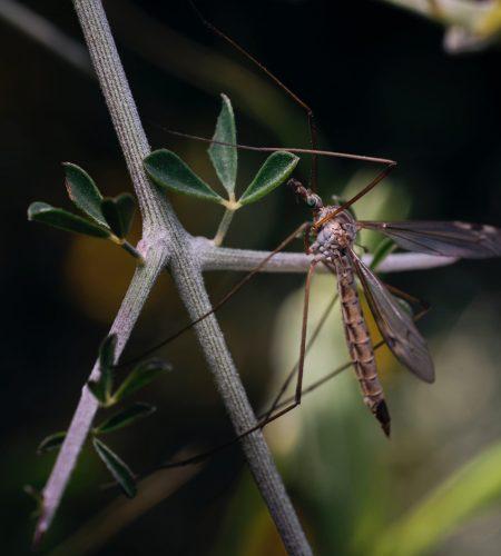 moustique 2